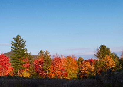 fall land landscapes color